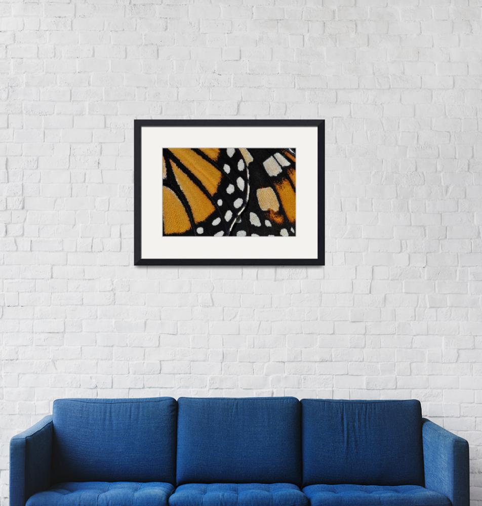 """""""Monarch Butterfly Wing Abstract No2""""  (2010) by evansonart"""
