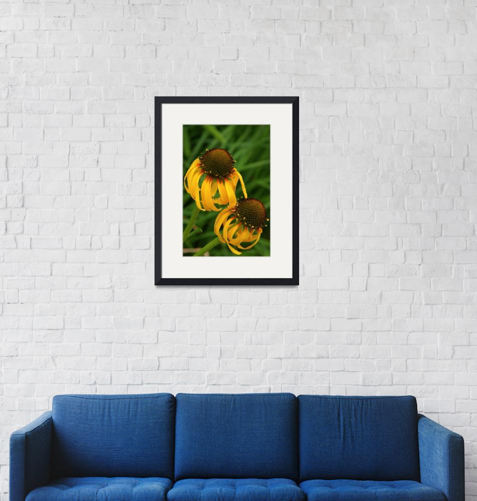 """Ozark Yellow Coneflower""  (2011) by LightHeart"