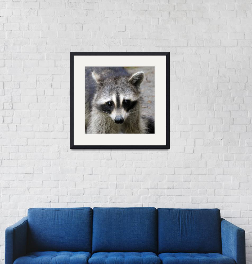 """Portrait of a Raccoon""  (2019) by Kimmary"