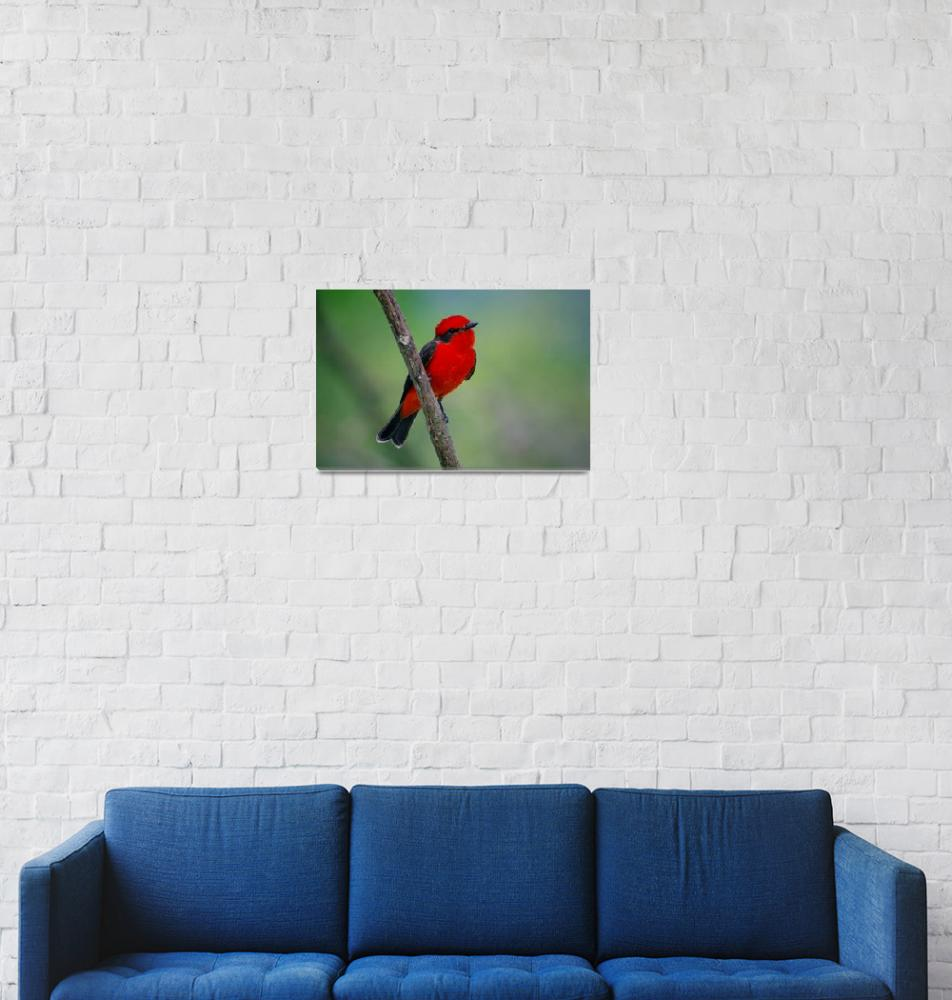 """""""Red flycatcher of Colombia""""  (2016) by DanSteeves"""