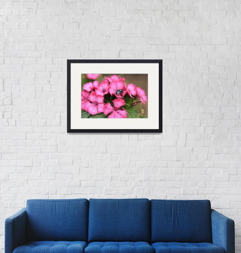 """""""Phlox and Fly""""  by ScottHovind"""