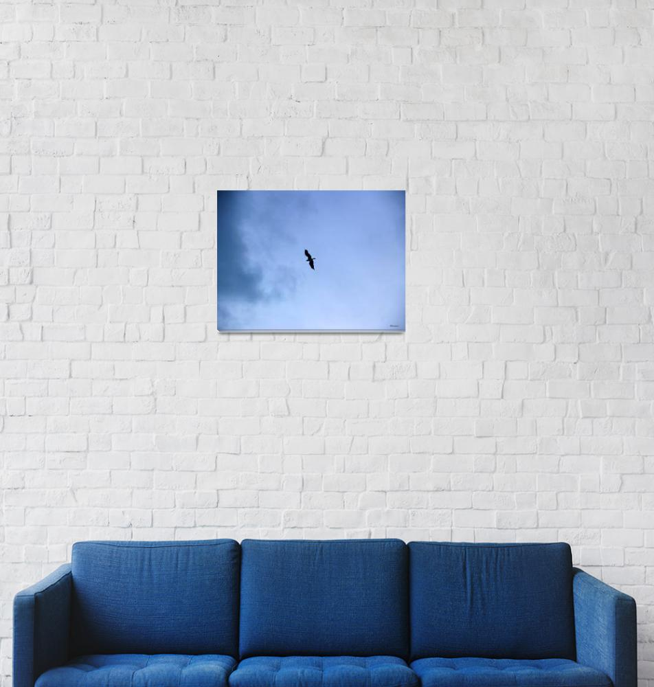 """Lone Peregrine Falcon Overhead C1""  (2016) by Ricardos"