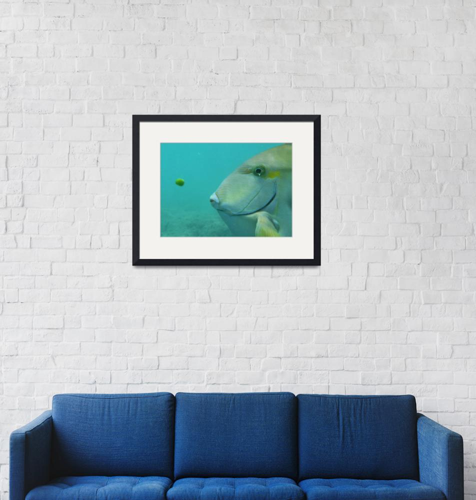 """""""The fish and the Pea""""  (2009) by michaeldcook"""