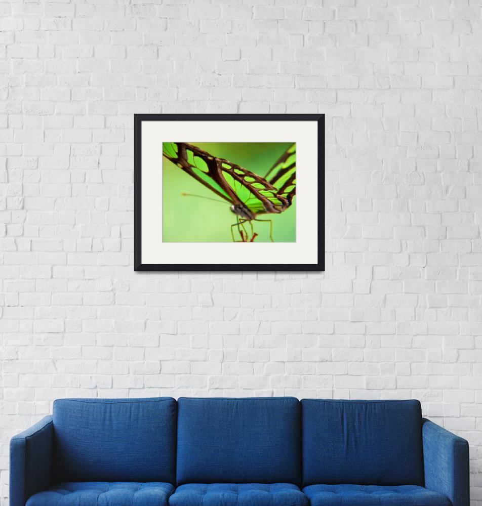 """Green butterfly""  (2007) by resouzaesouza"