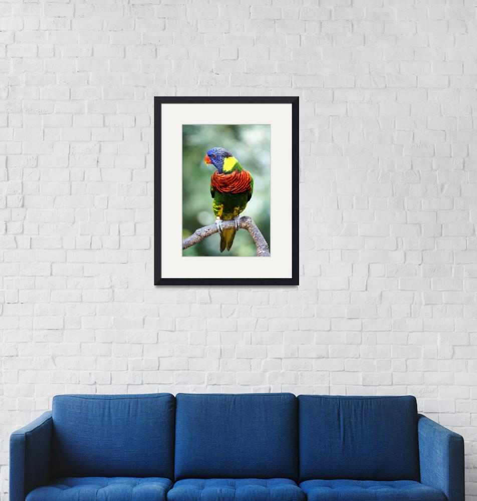 """Rainbow Lorikeet"" (2013) by JennyZhang"