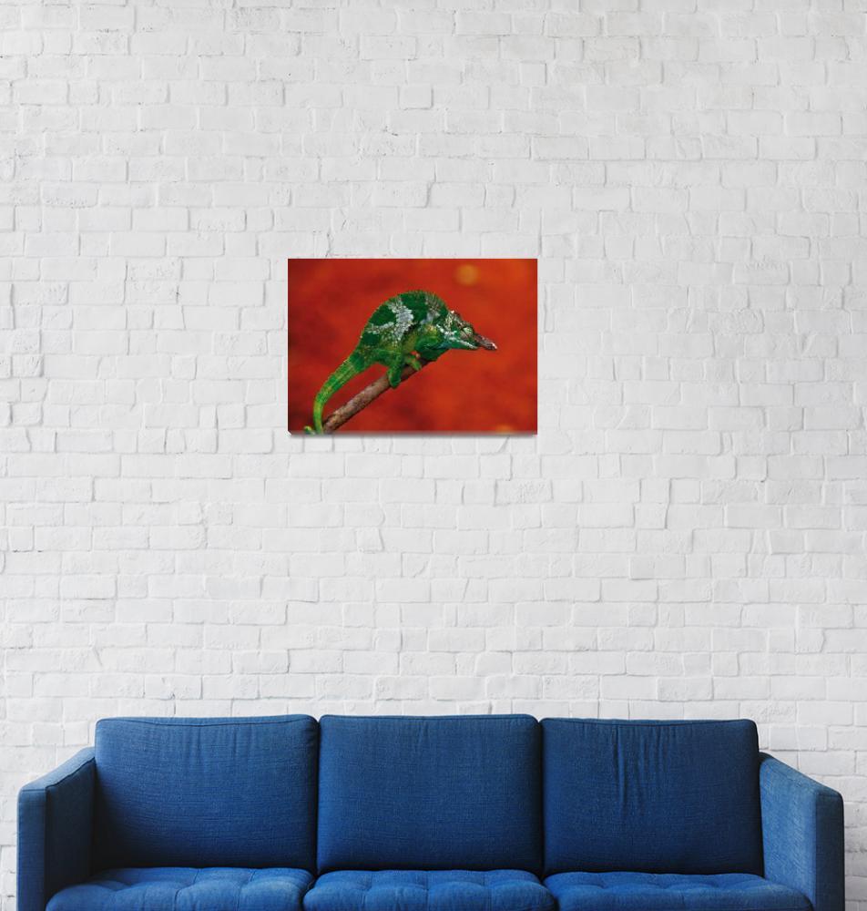 """""""Chameleon""""  (2010) by deinblick"""