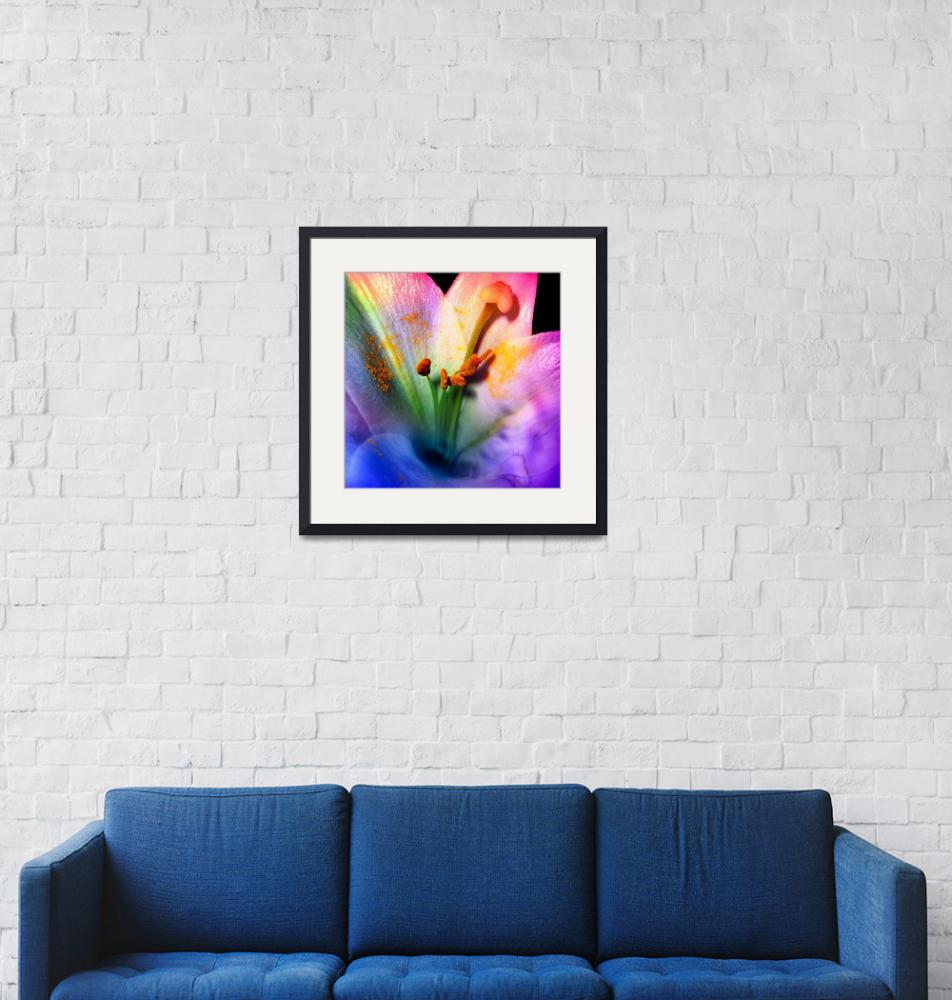 """""""Lily-in-color""""  (2009) by AnneVis"""