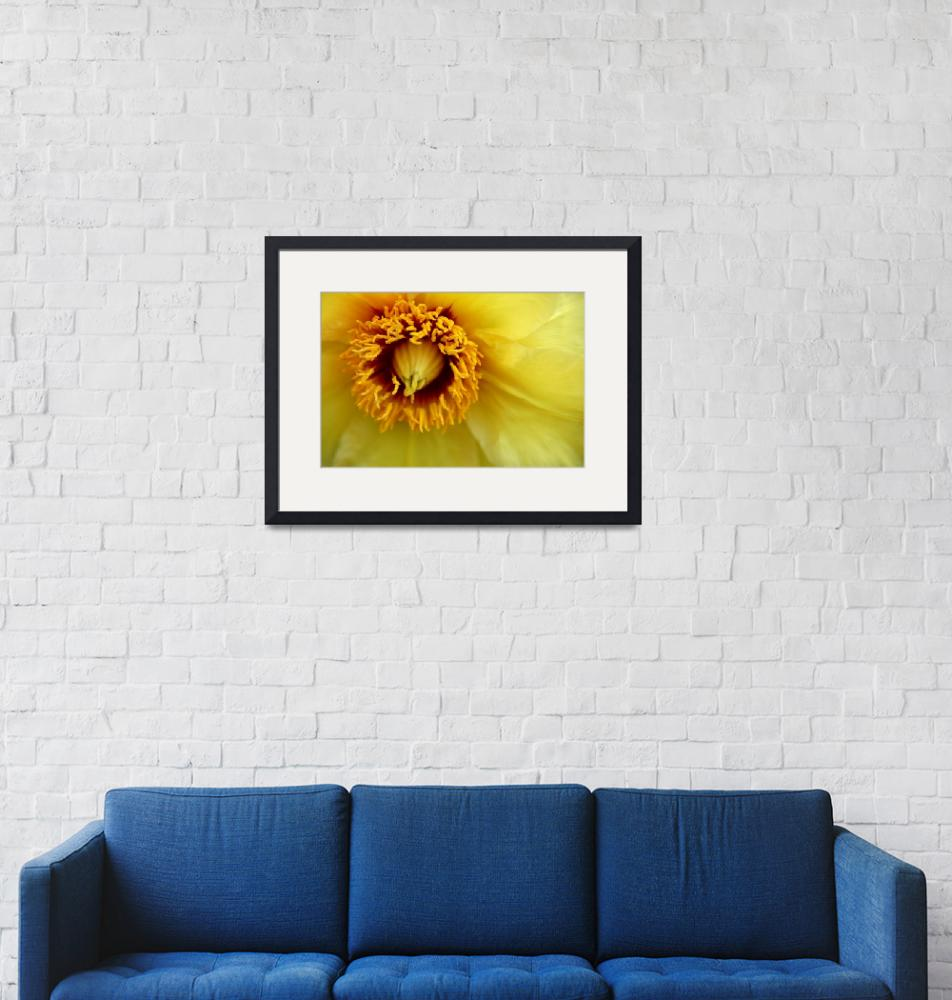 """Yellow Clematis""  (2010) by BranchDesign"