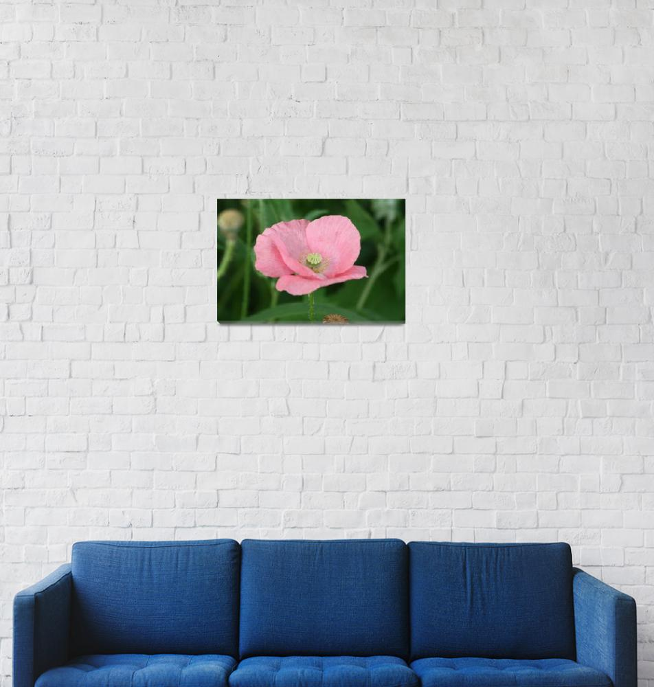 """pink poppy""  (2012) by ssscholtes"