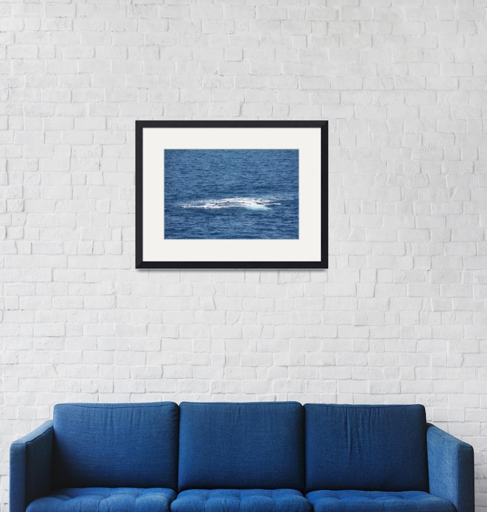 """""""NaP_ Whale Watching111""""  by nevilleprosser"""