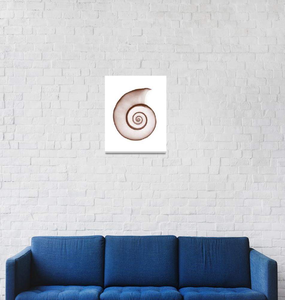 """Snail Shell""  (1973) by DennisMash"