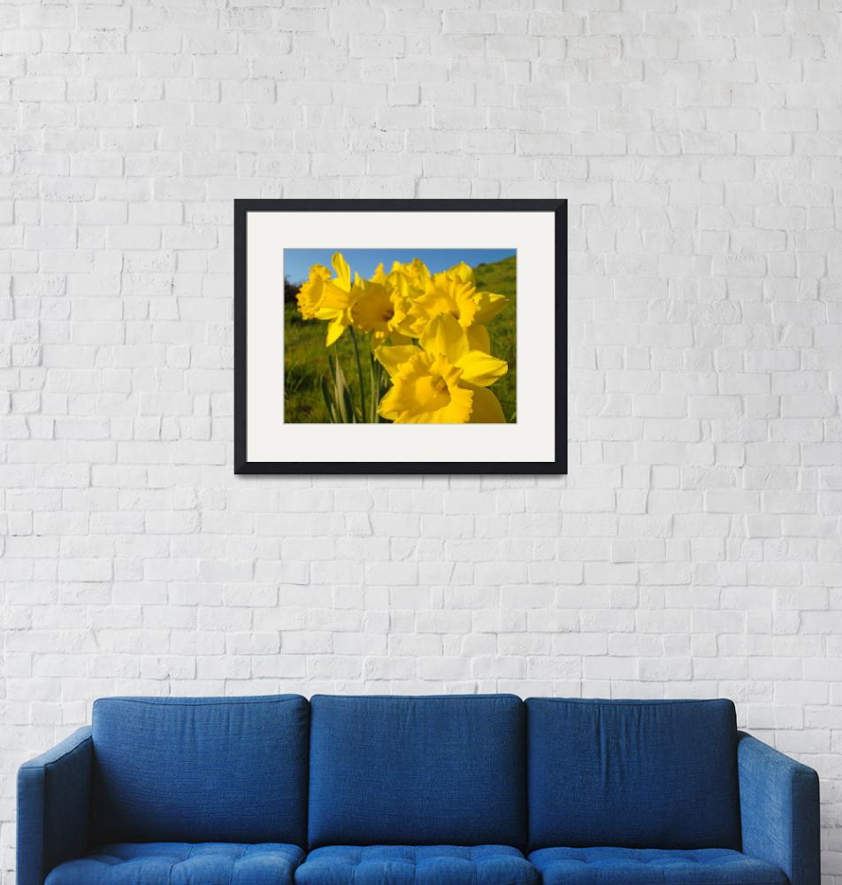 """""""Golden Yellow Daffodil Flowers art prints Spring""""  (2010) by BasleeTroutman"""
