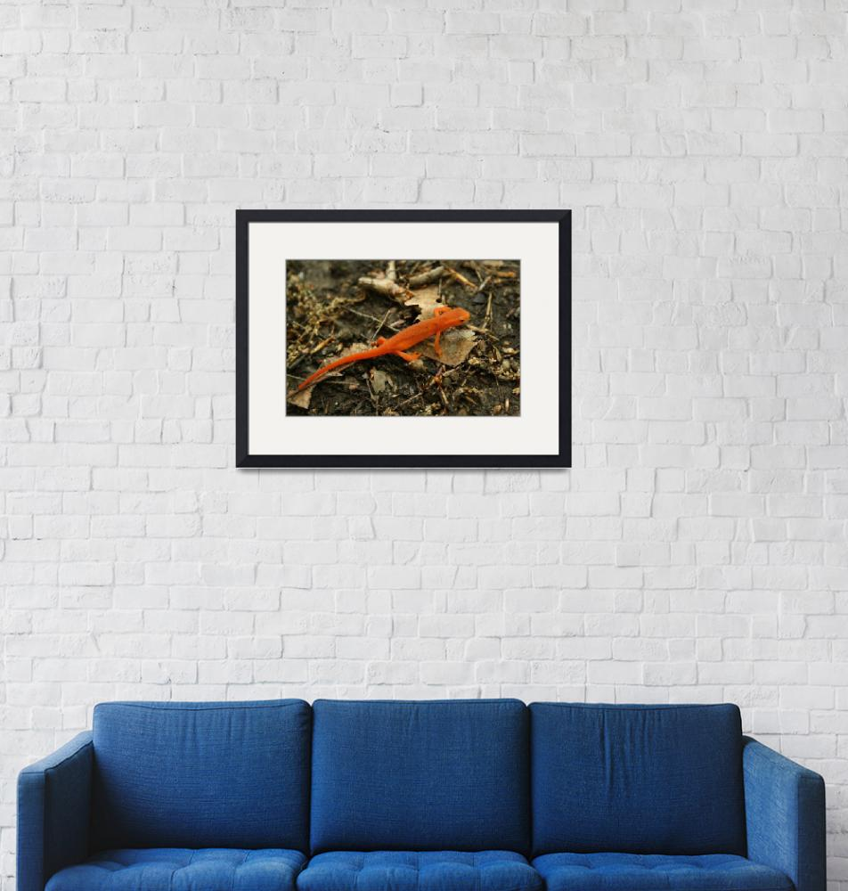 """""""Red-spotted Newt""""  (2008) by hviola"""