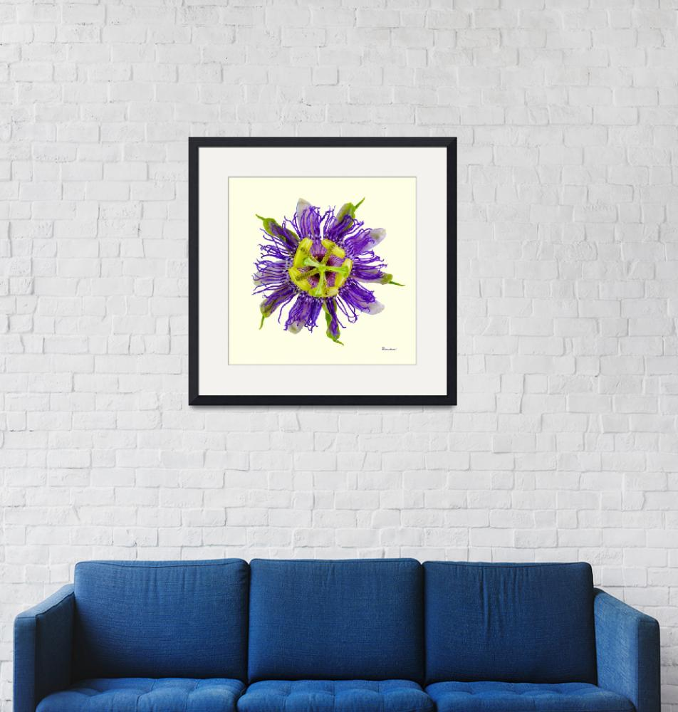 """""""Yellow Green and Violet Passion Flower 50674Y""""  (2018) by Ricardos"""