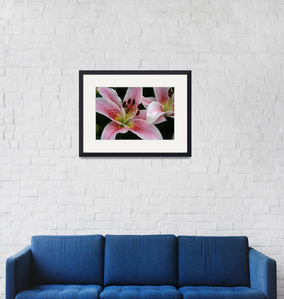 """""""Pink Lilies"""" by yellow"""