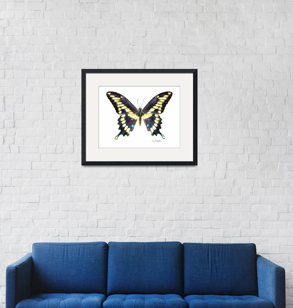 """""""Giant Swallowtail""""  (2008) by LisaMclaughlin"""