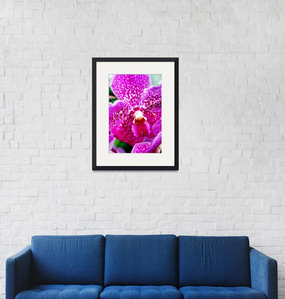 """Pink Orchid""  by lauraward"