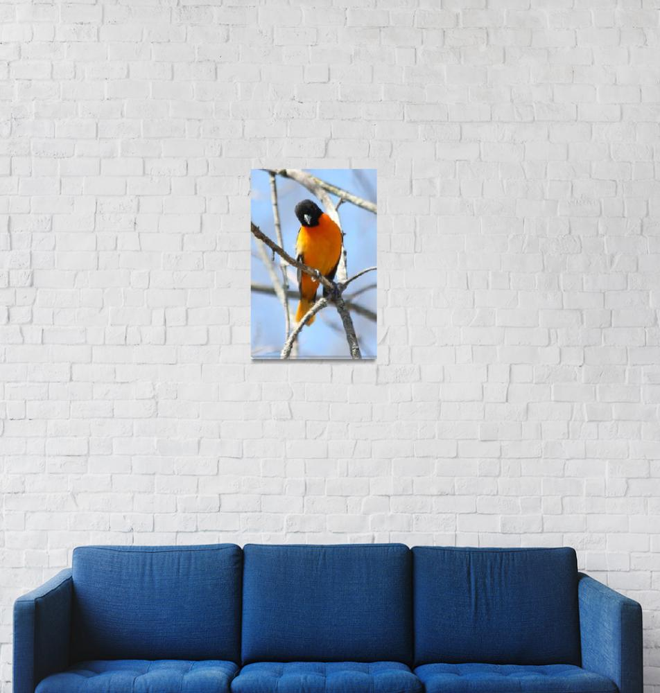 """""""Baltimore Orioles""""  by cameragal"""