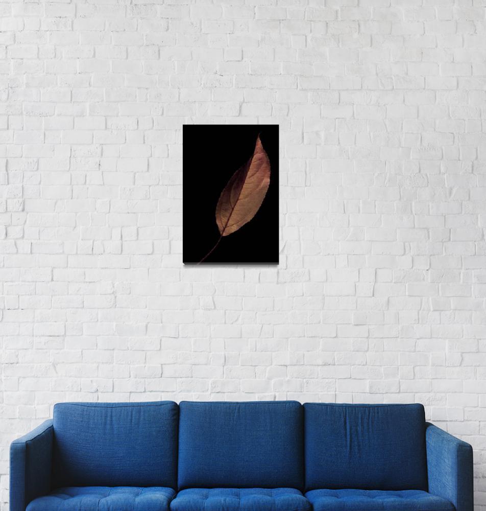 """""""Leaf""""  (2007) by dawnleblanc"""