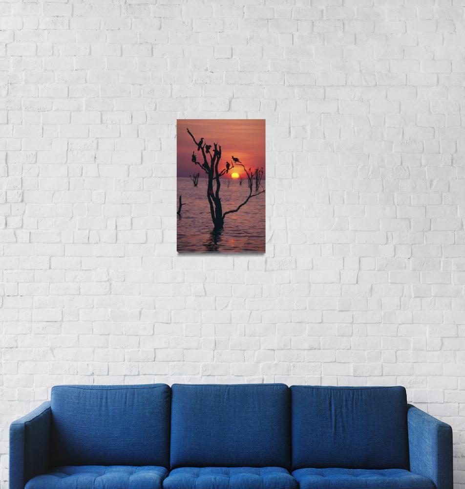 """Birds On Tree, Lake Kariba At Sunset Zimbabwe""  by DesignPics"