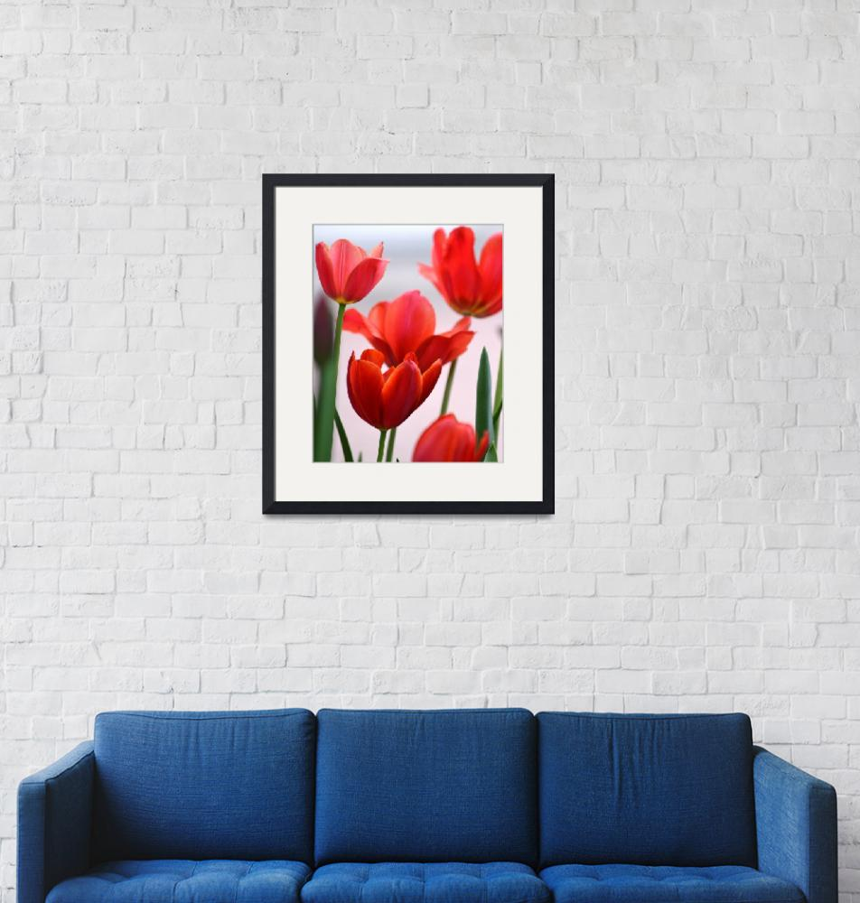 """Red Tulips""  (2014) by joanhan"