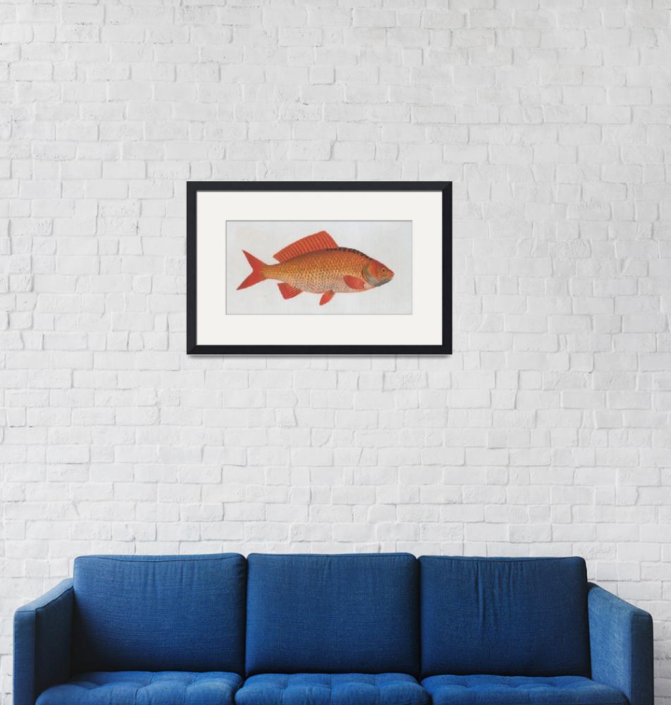 """""""Vintage Illustration of a Goldfish (1785)"""" by Alleycatshirts"""