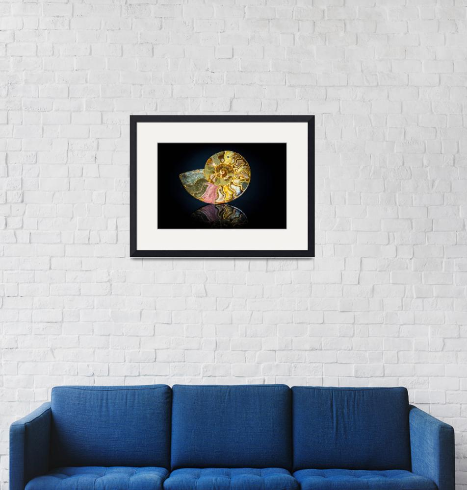 """""""Ammonite Fossil Image""""  (2015) by beecreekphotography"""