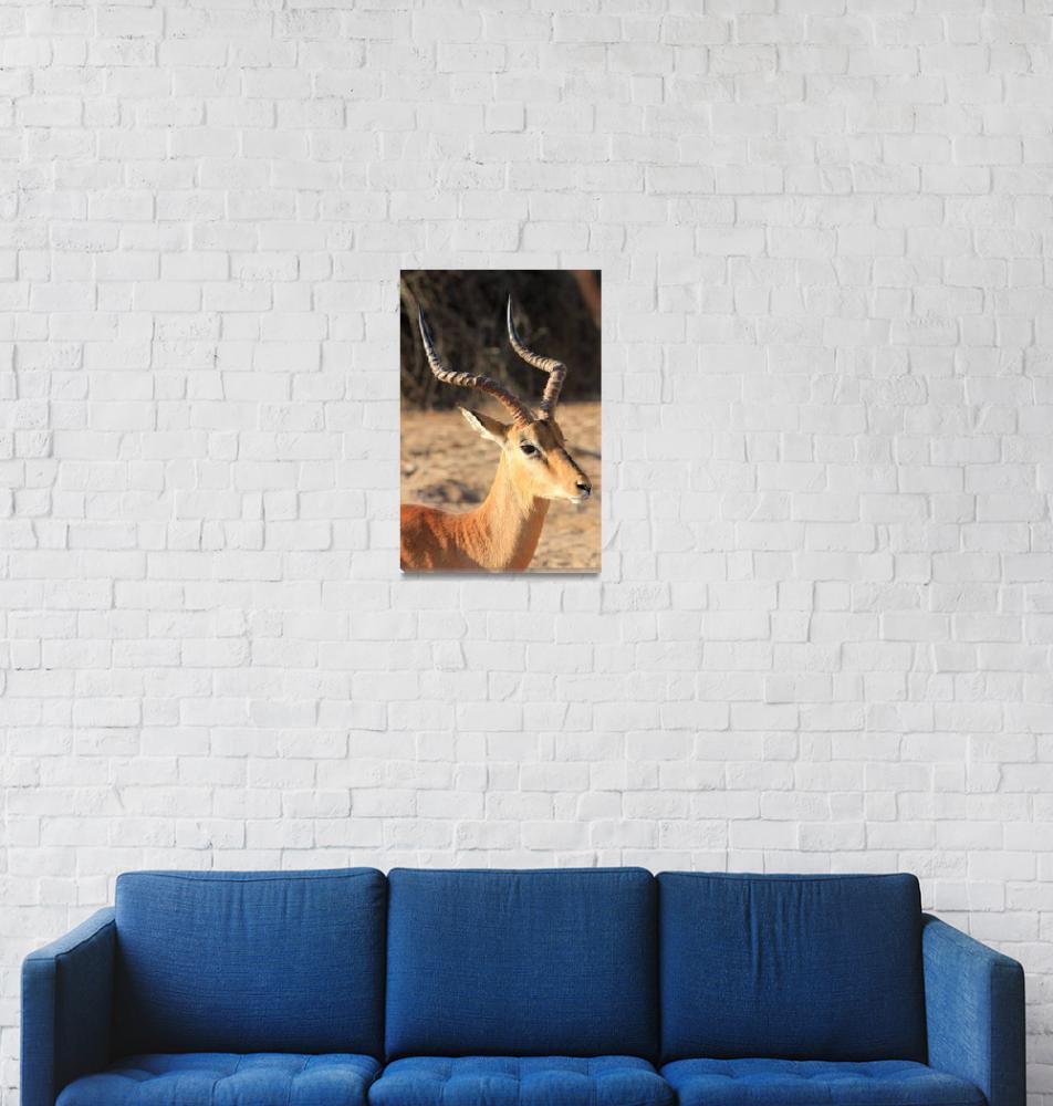 """Male Impala 5074""  (2013) by rayjacque"