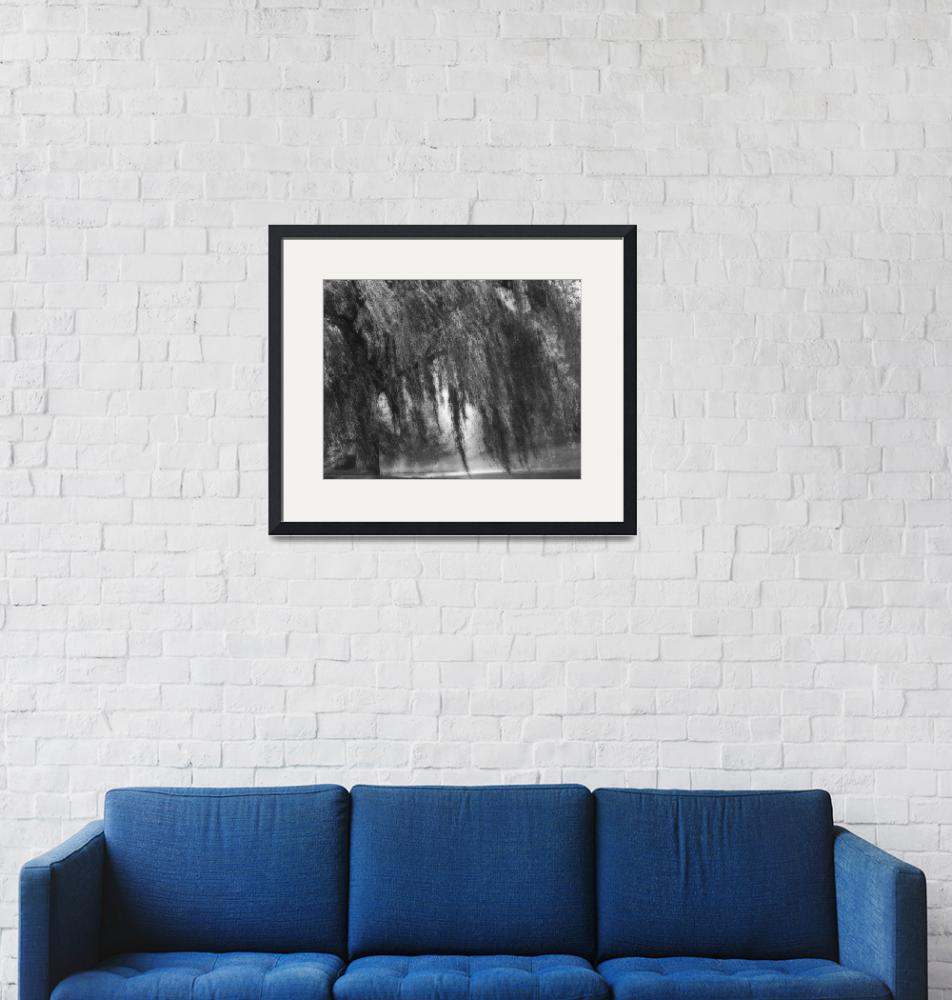 """""""B&W Weeping Willow Tree Landscape Nature Scene""""  (2008) by PhotographsByCarolFAustin"""