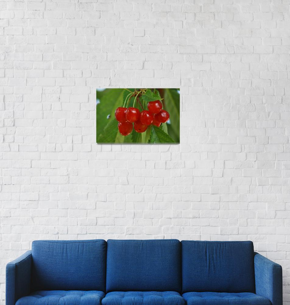"""Cherries""  (2011) by gezimgeci"