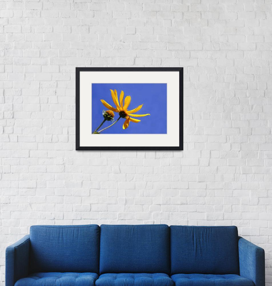 """""""Yellow on blue""""  (2009) by CampCrazyPhotography"""