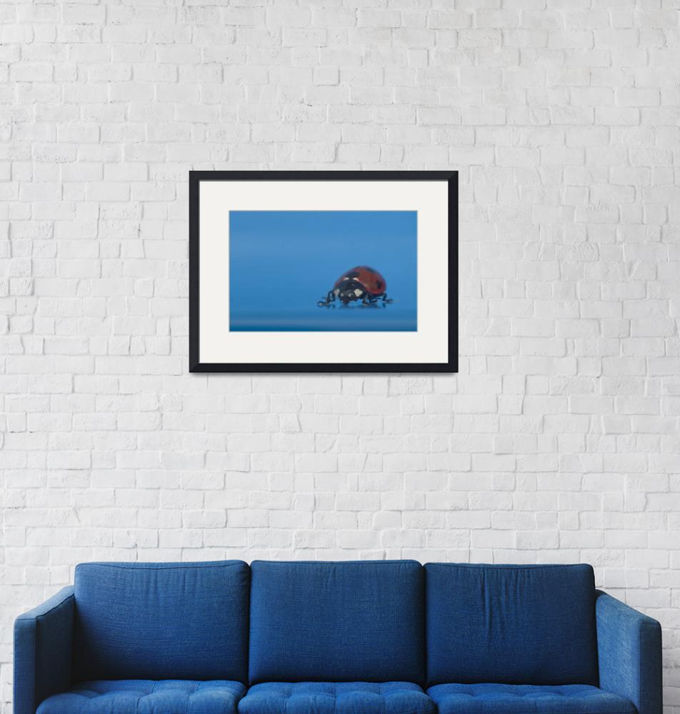 """Ladybird in Blue""  by rozter"