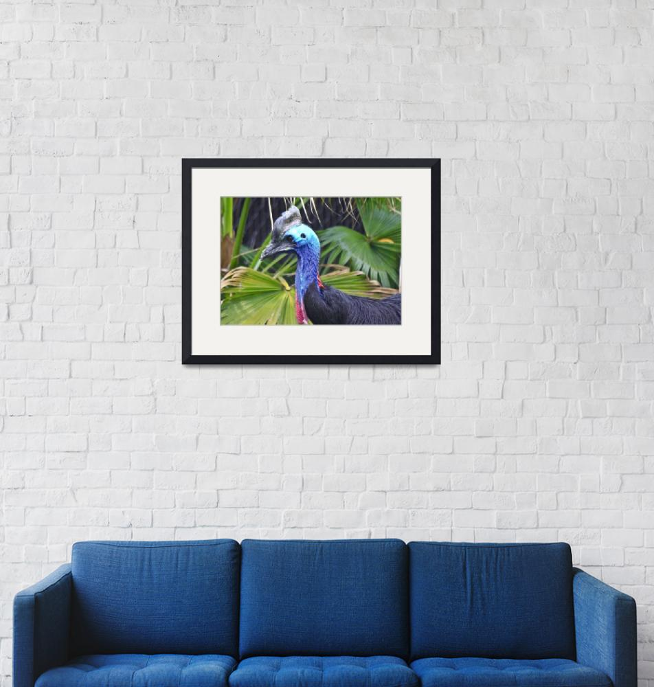 """""""Colorful Cassowary"""" (2010) by RichImages"""