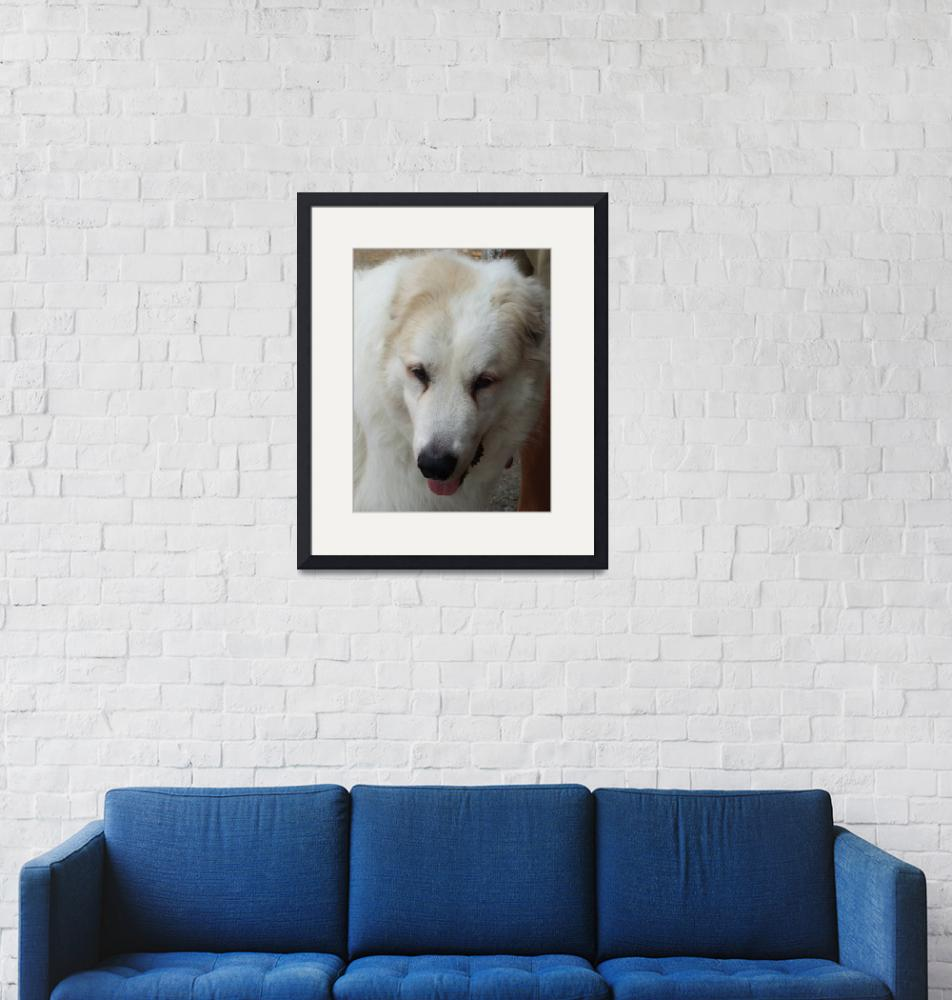 """""""Willow - the Great Perinese Dog""""  (2009) by MariaK"""