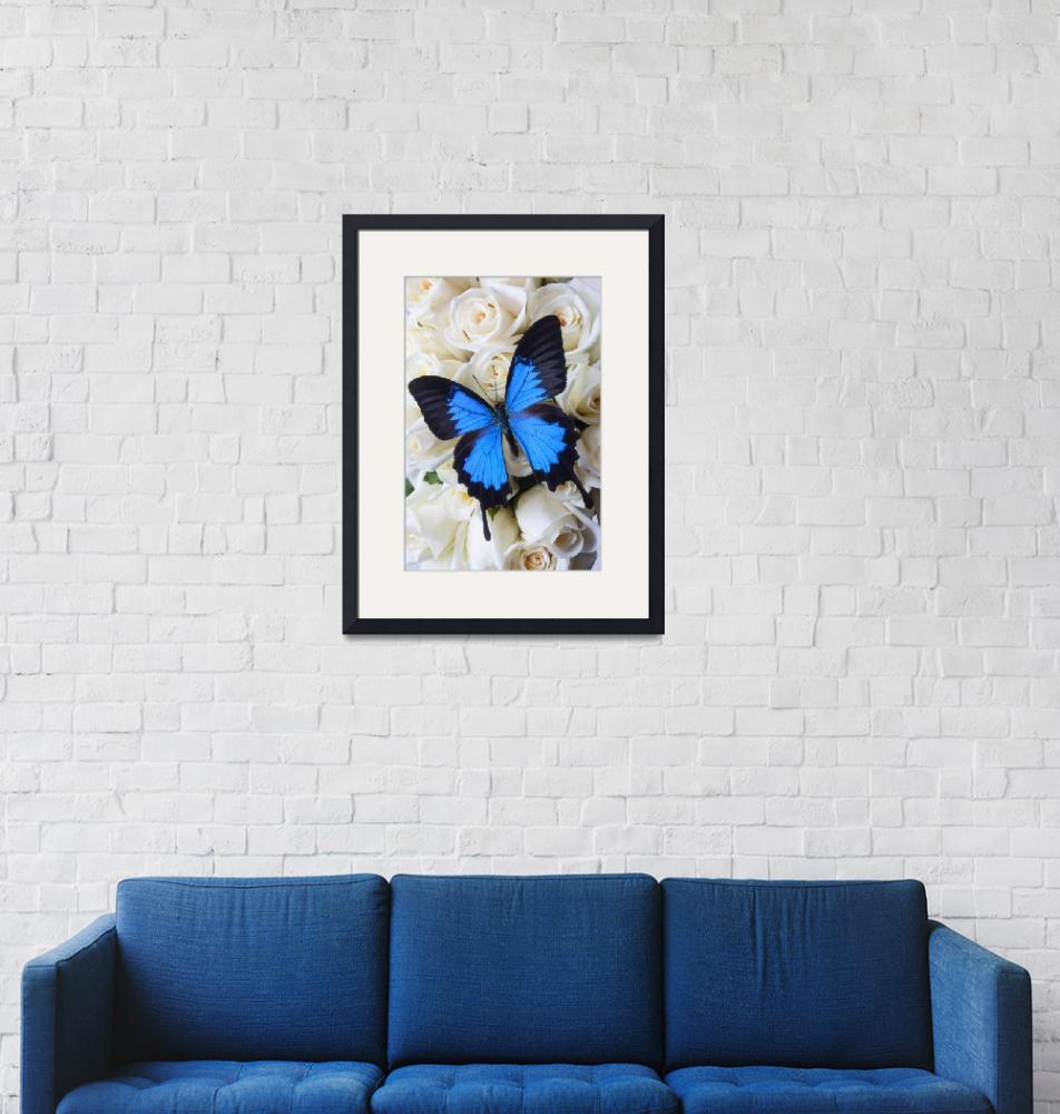 """""""Blue butterfly on white roses""""  (2012) by photogarry"""