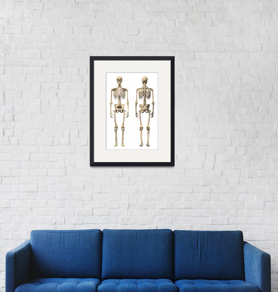 """""""Anatomy of male human skeleton, front view and bac""""  by stocktrekimages"""
