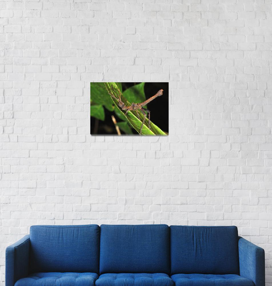 """""""Woodstick Insect""""  (2015) by JoaoPonces"""