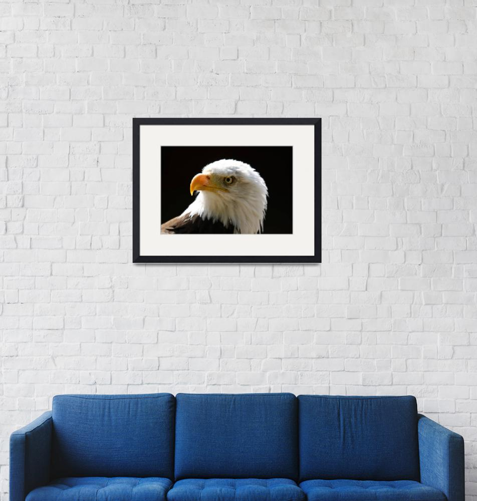 """""""Bald Eagle""""  by snapitphotography"""