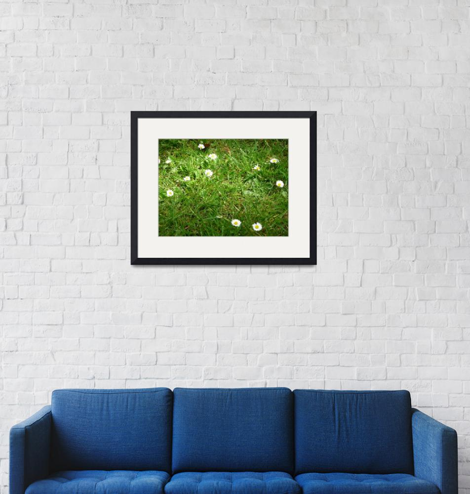 """""""Daisies in grass"""" (2009) by Laura-Michele"""