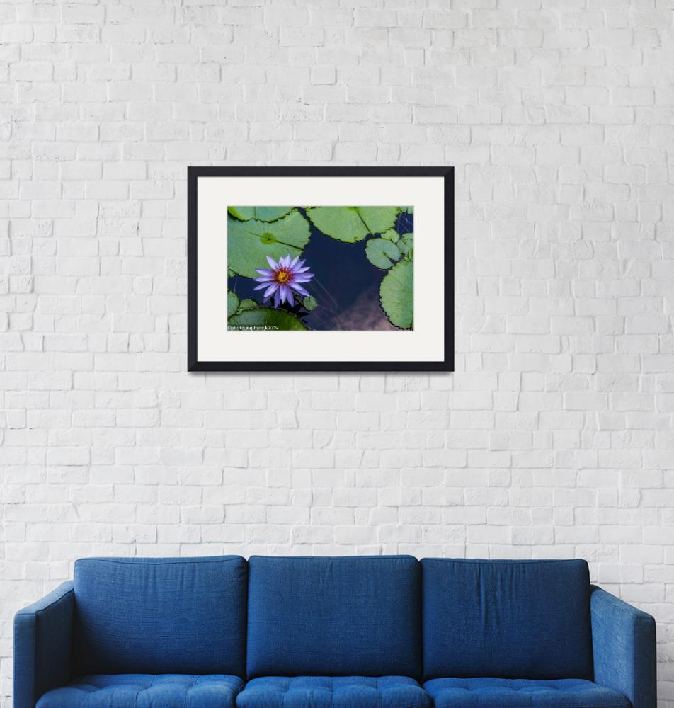 """""""Water Lily""""  (2019) by jkphotos"""