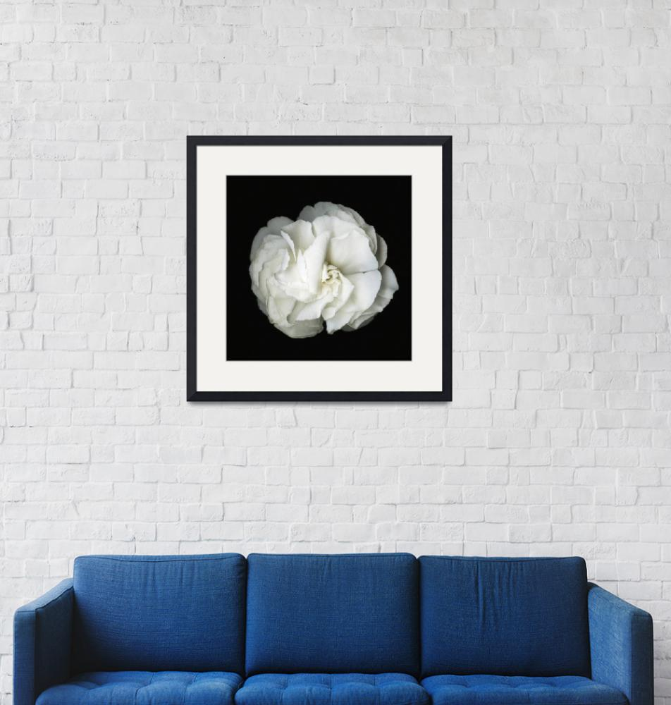 """""""Flower blossom- Black and white photography""""  (2016) by modernhouseart"""