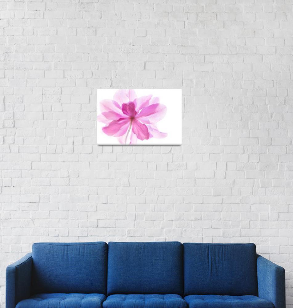 """Anemone Flower Soft and Gentle""  (2015) by NatalieKinnear"