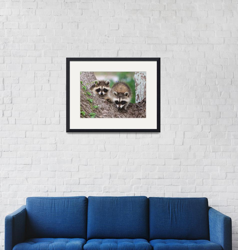 """""""Baby Raccoons""""  (2013) by last_light"""