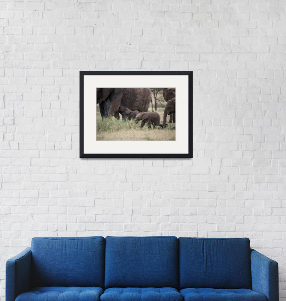 """""""Elephant Baby and Herd""""  (2014) by SederquistPhotography"""