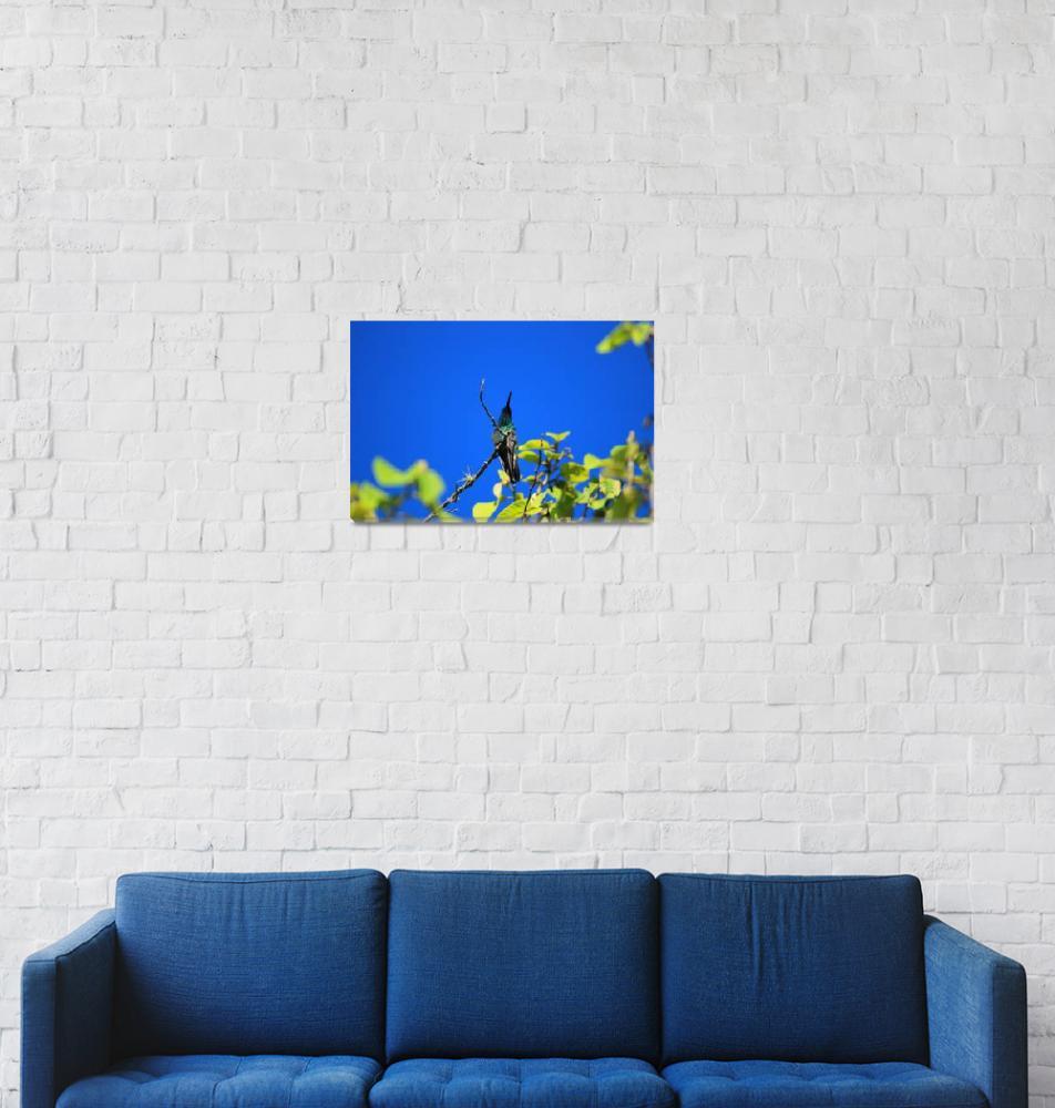 """Sparkling Violetear Hummingbird in a Tree""  (2015) by rhamm"