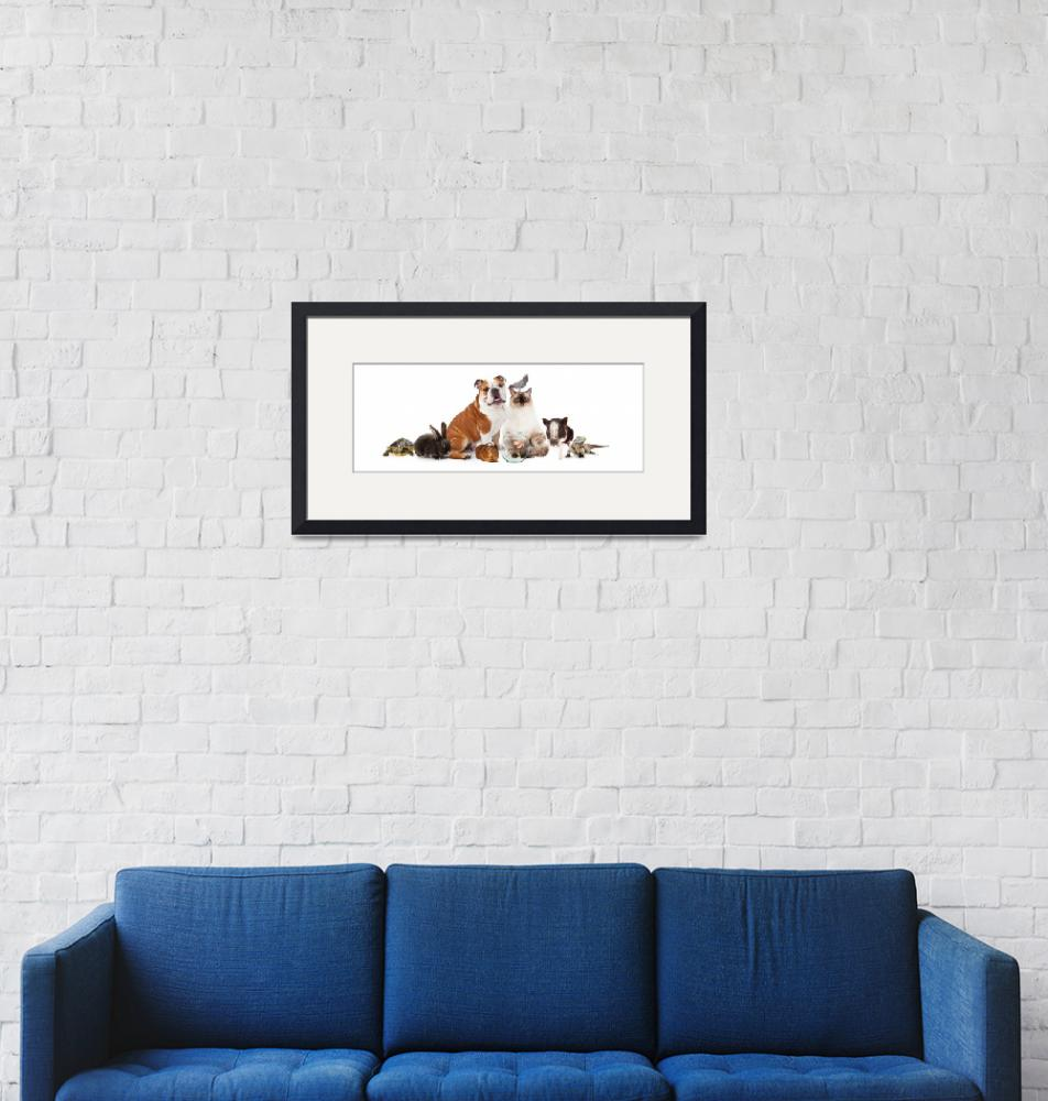 """""""Collection of Domestic Pets Together""""  (2016) by ADogsLifePhoto"""