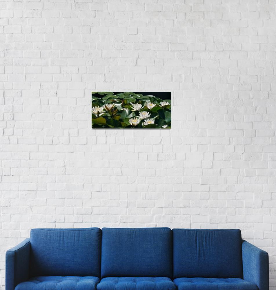 """""""Double White Hardy Water Lilies""""  (2012) by LightHeart"""