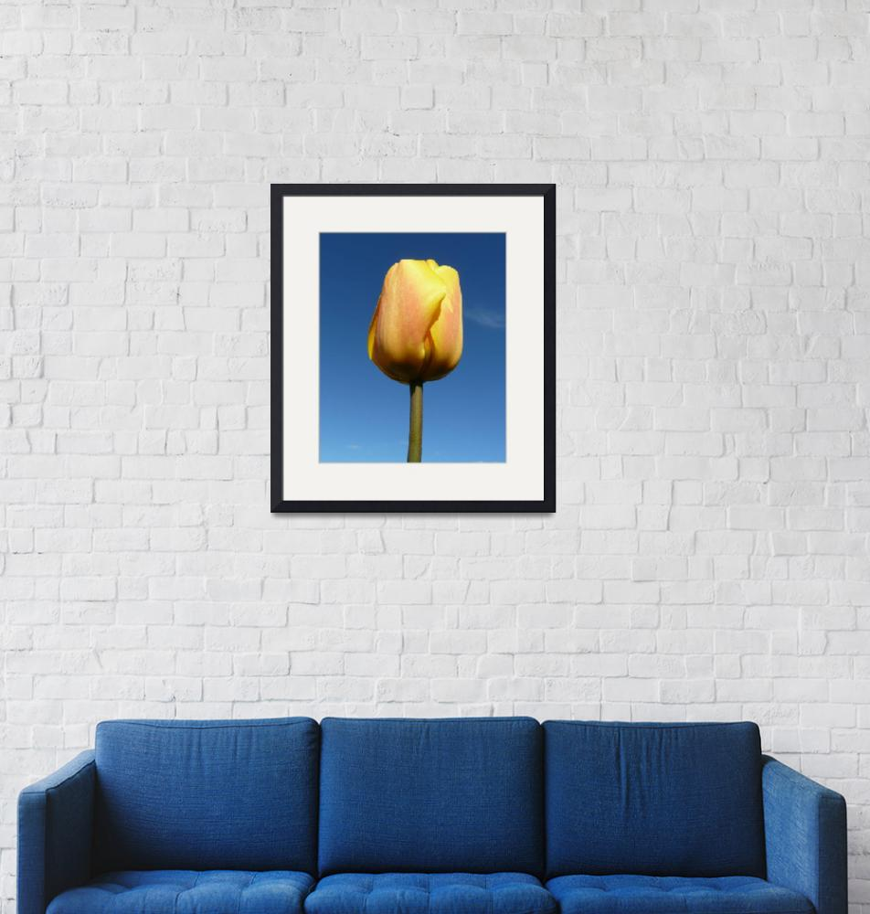 """""""Yellow Tulip""""  (2012) by JMcCoubreyPhotography"""