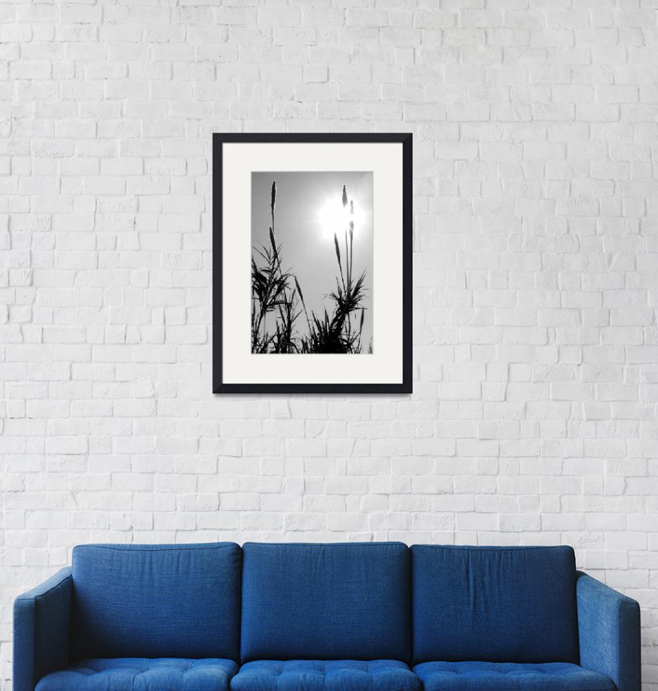 """""""black and white reeds""""  (2010) by Elenilou"""