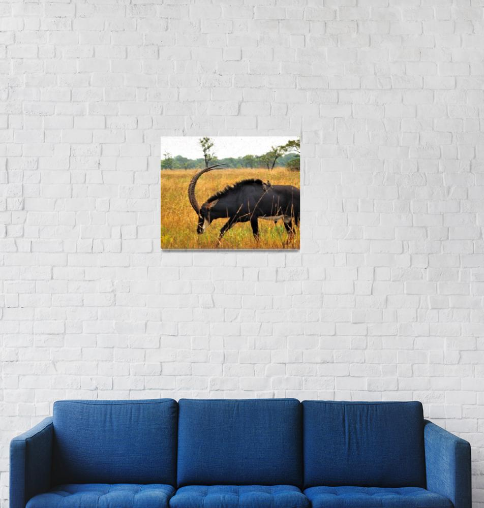 """Palanca Negra Gigante, Giant Sable Antelope, (Hipp""  (1973) by JoaoPonces"